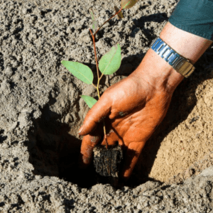 replanting forests
