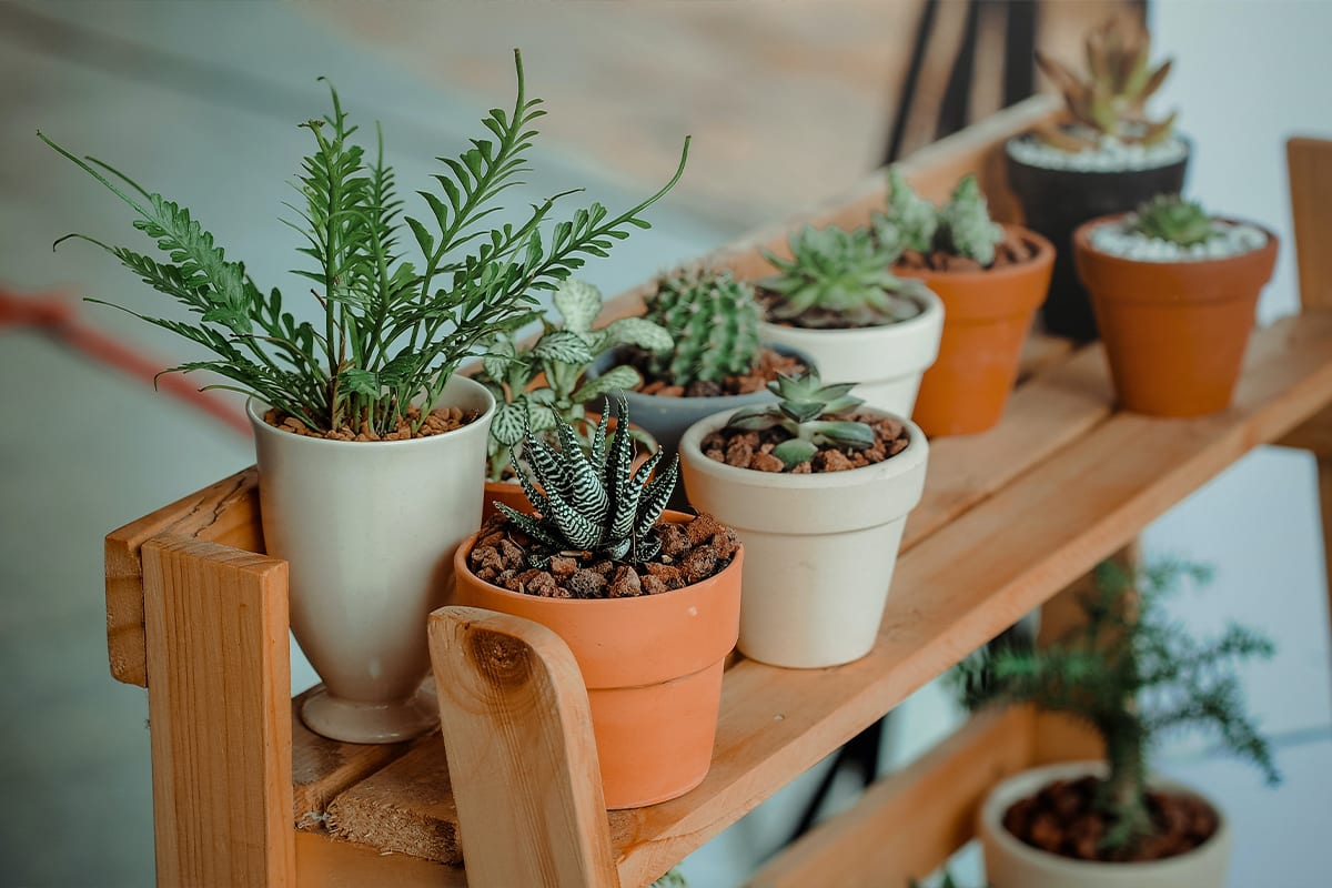 Give plants as a gift