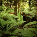 Nature Conservation Council of NSW Tarkine 2022